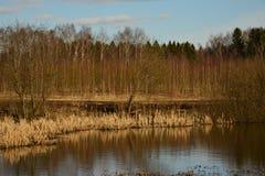 Сельский ландшафт весной Стоковые Изображения RF