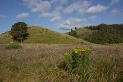 Сельский ландшафт в временени Стоковые Фото