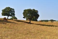 Сельский ландшафт, Португалия Стоковые Фотографии RF