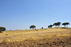 Сельский ландшафт, Португалия Стоковое Изображение