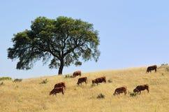 Сельский ландшафт, Португалия Стоковые Изображения RF