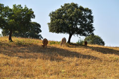 Сельский ландшафт, Португалия Стоковое Изображение RF