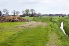 Сельский ландшафт с выгоном и фермой в Nunspeet стоковые изображения rf