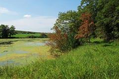 Сельский ландшафт с деревьями и прудом Стоковые Фото