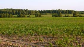 Сельский ландшафт с полем Стоковое фото RF