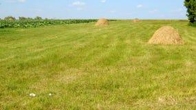 Сельский ландшафт с полем Стоковые Изображения