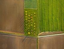Сельский ландшафт с полями Стоковые Изображения RF