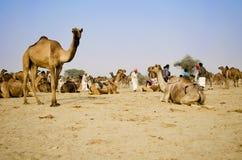Сельский ландшафт с сельчанин и верблюдами Стоковые Изображения RF