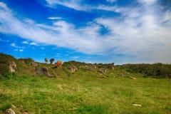Сельский ландшафт с табуном коров Стоковые Изображения RF