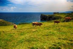 Сельский ландшафт с табуном коров Стоковые Фотографии RF