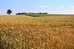 Сельский ландшафт стоковая фотография rf