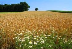 Сельский ландшафт стоковые фото