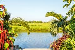 Сельский Вьетнам Стоковое фото RF