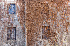Сельский дом итальянки стены плюща стоковые фото