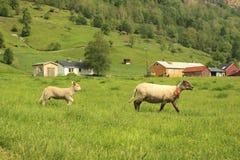 Сельский пейзаж в Норвегии Стоковые Изображения