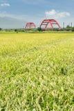 сельский пейзаж стоковое фото rf