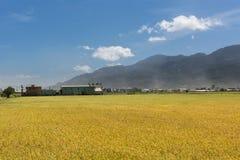 сельский пейзаж стоковая фотография rf