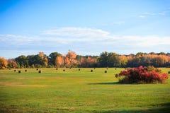 Сельское поле с связками сена Стоковая Фотография RF