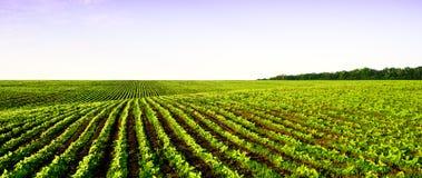 Сельское хозяйство панорамы поля Стоковая Фотография