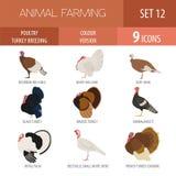 Сельское хозяйство птицы Комплект значка пород Турции Плоский дизайн Стоковое Фото