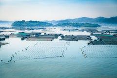 Сельское хозяйство рыб морепродуктов, рыбозавод на море, Fujiang, Китае стоковые фото
