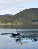 Сельское хозяйство рыб Стоковое Изображение RF