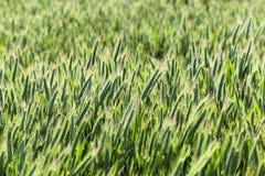 Сельское хозяйство хлопья Весна стоковая фотография