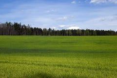 Сельское хозяйство хлопья Весна стоковое фото rf