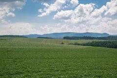 Сельское хозяйство Стоковые Изображения