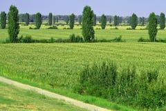 Сельское хозяйство Стоковая Фотография