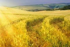 Сельское хозяйство Стоковые Изображения RF