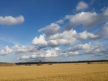 Сельское хозяйство Стоковые Фотографии RF
