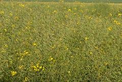 Сельское хозяйство Стоковое Изображение