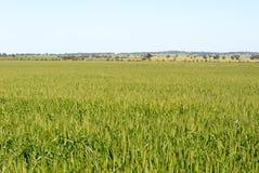 Сельское хозяйство Стоковое Фото