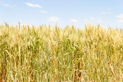 Сельское хозяйство Стоковые Фото