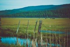 Сельскохозяйственне угодье на заходе солнца Стоковые Фото