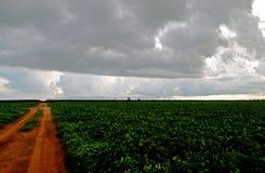 Сельскохозяйственное угодье с облаками стоковая фотография rf