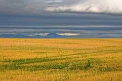 Сельскохозяйственное угодье с темным небом Стоковые Изображения RF