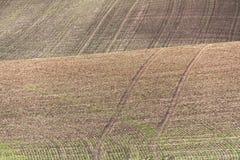 Сельскохозяйственное угодье Стоковое Изображение