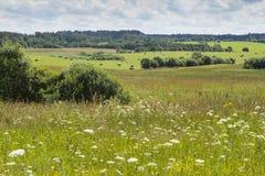 Сельскохозяйственное угодье Стоковое Изображение RF