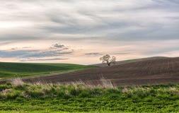 Сельскохозяйственное угодье Стоковое Фото