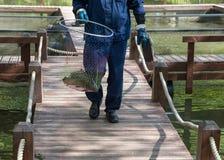 Сельскохозяйственный рабочий рыбоводческого хозяйства идет на деревянные мосты и носит обруч-сеть w стоковые фото
