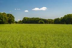 сельско Стоковая Фотография RF