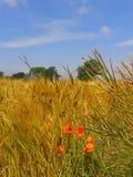 сельско Стоковые Фотографии RF