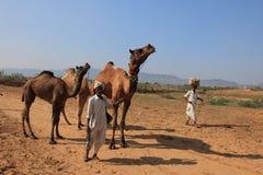 Сельчанин с его верблюдом участвует в Pushkar справедливо стоковое изображение