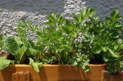 Сельдерей и шпинат в баке Стоковые Фотографии RF
