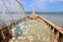Сельди в сети на рыбацкой лодке Стоковое Фото