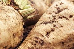Сжатая куча корня урожая сахарной свеклы Стоковая Фотография RF