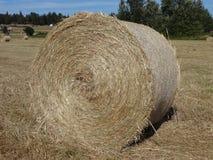 Сжатая связка сена Стоковая Фотография RF