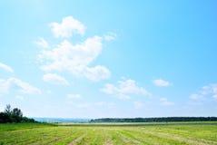 сжатая трава Стоковое фото RF